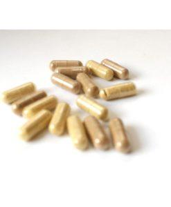 tongkat-ali-phyto-plus-capsules